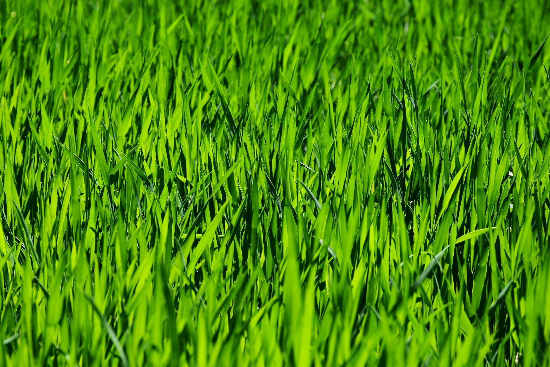 Pasto Sintético GreenSmart